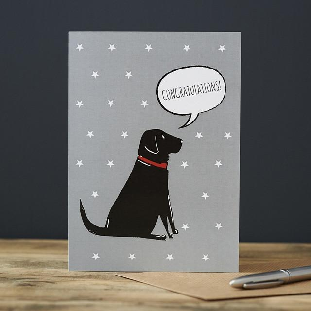 Sweet William Black Labrador Congratulations Card