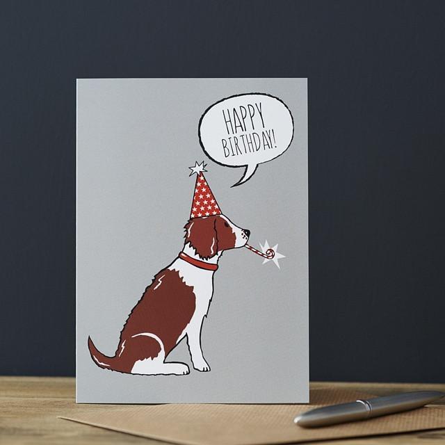 Sweet William Liver Springer Spaniel Birthday Card